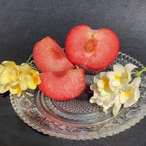 red plum & freesia